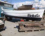 Beluga boot belettering